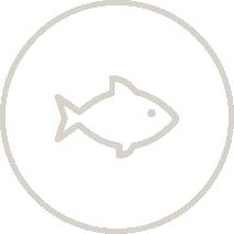 Totalenteprise fisk